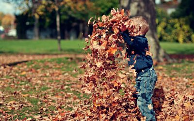ELEVEN things to do with…Leaves, Leaves, Leaves!